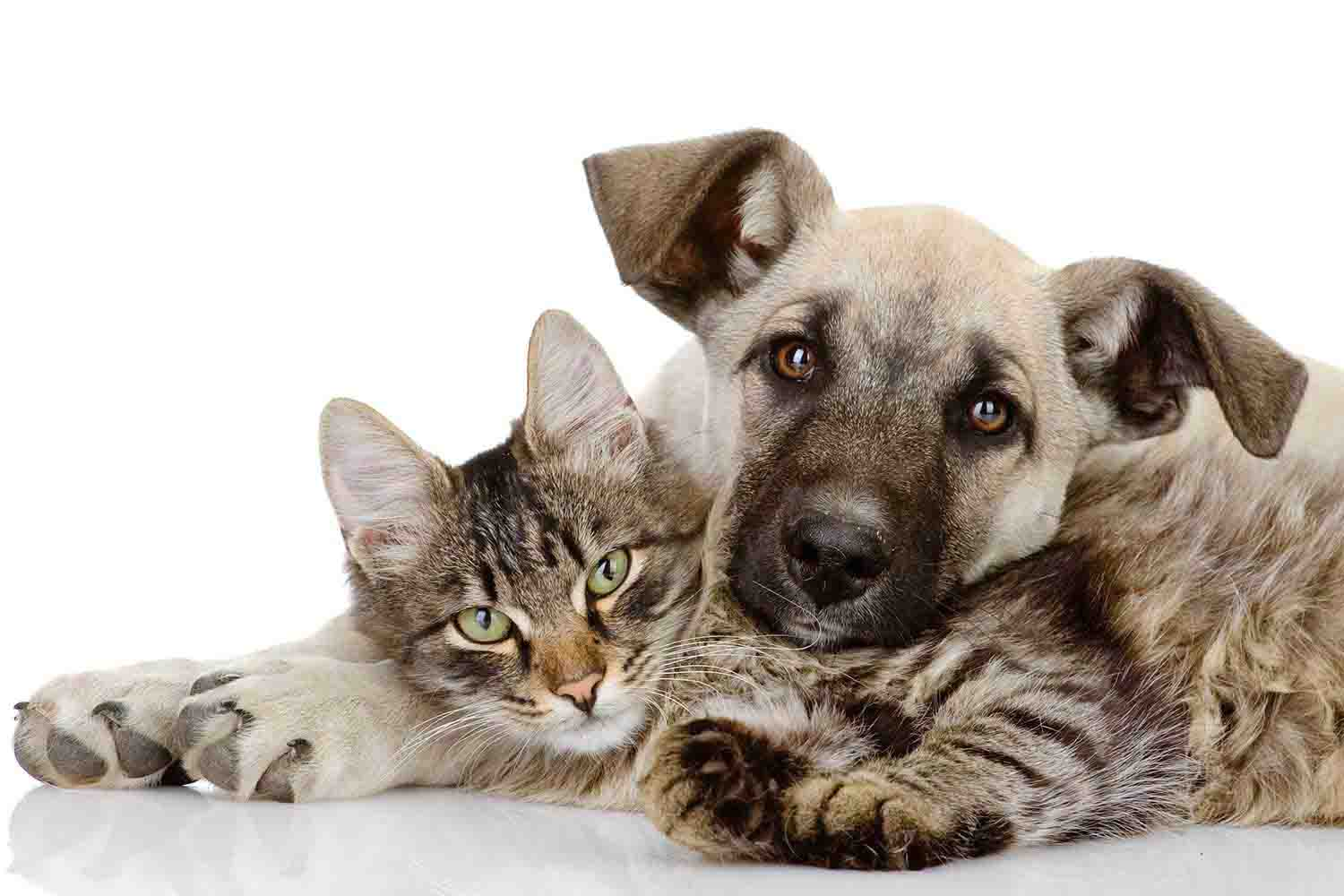 Vet Services for Dogs and Cats