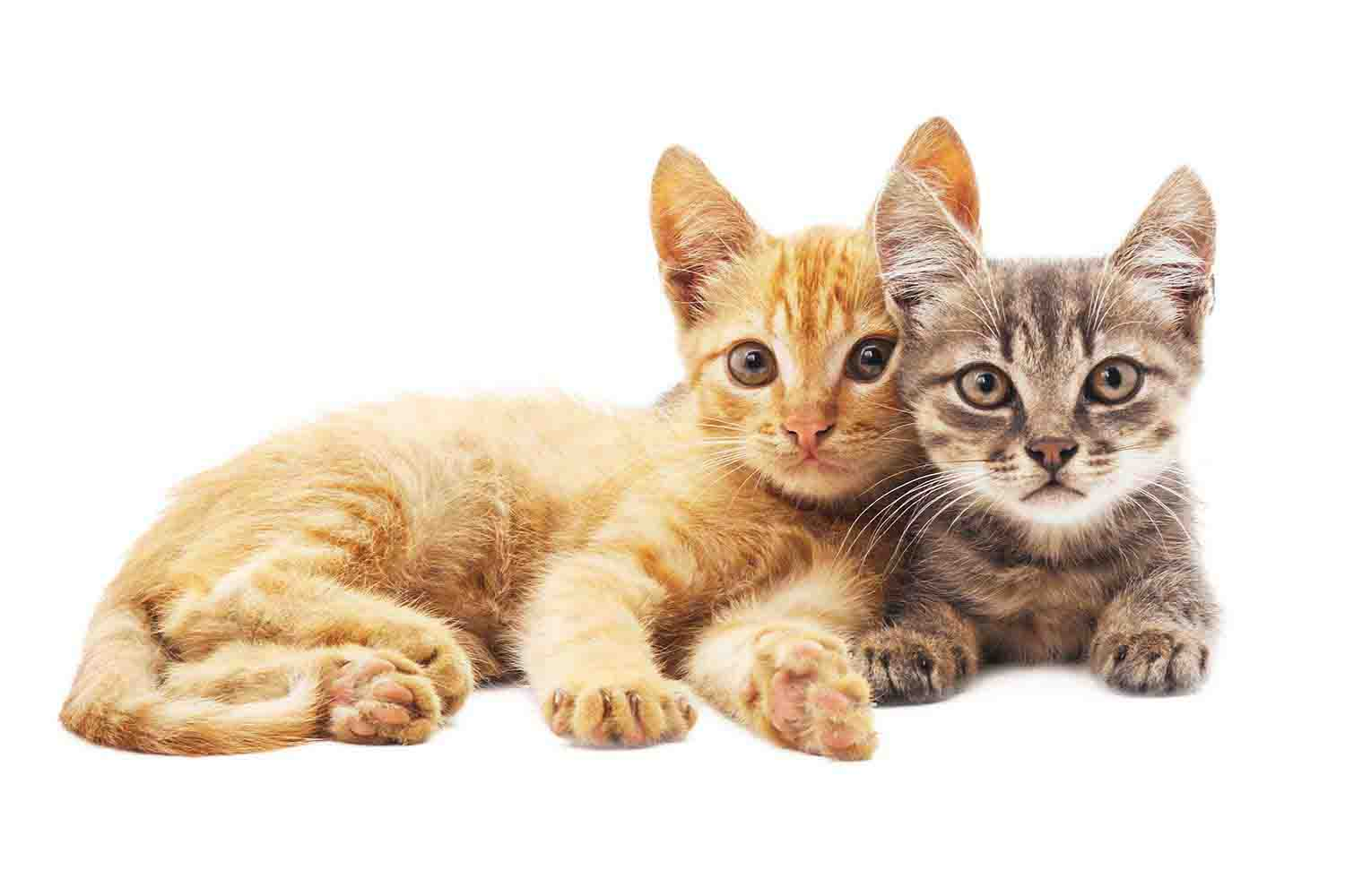 Vet Services for Cats