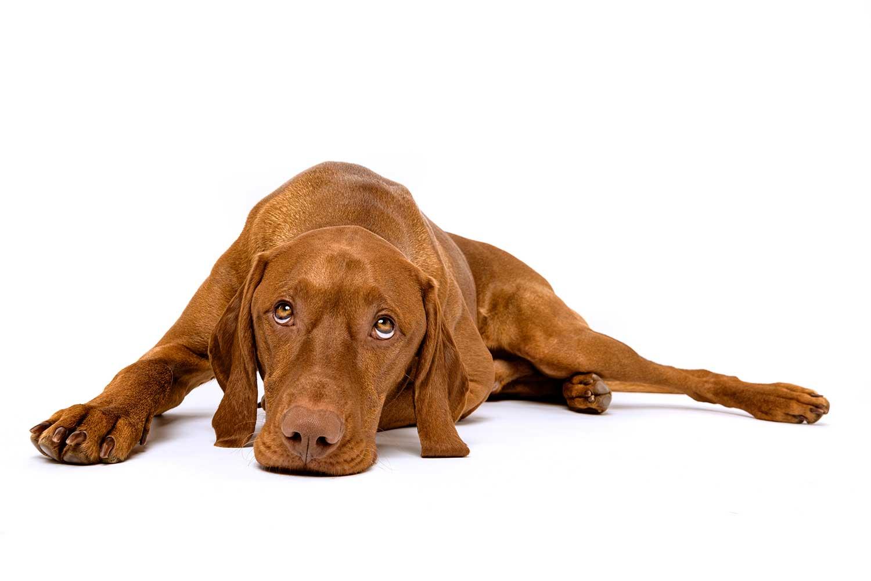 General Pet Health Care Information