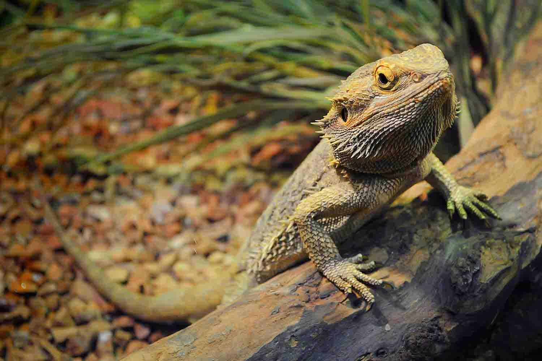 Lizard Care Services
