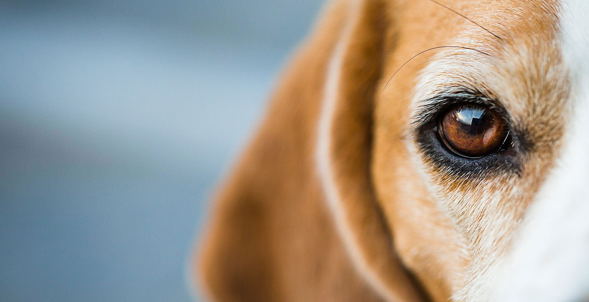 Ophthalmic Vet Services