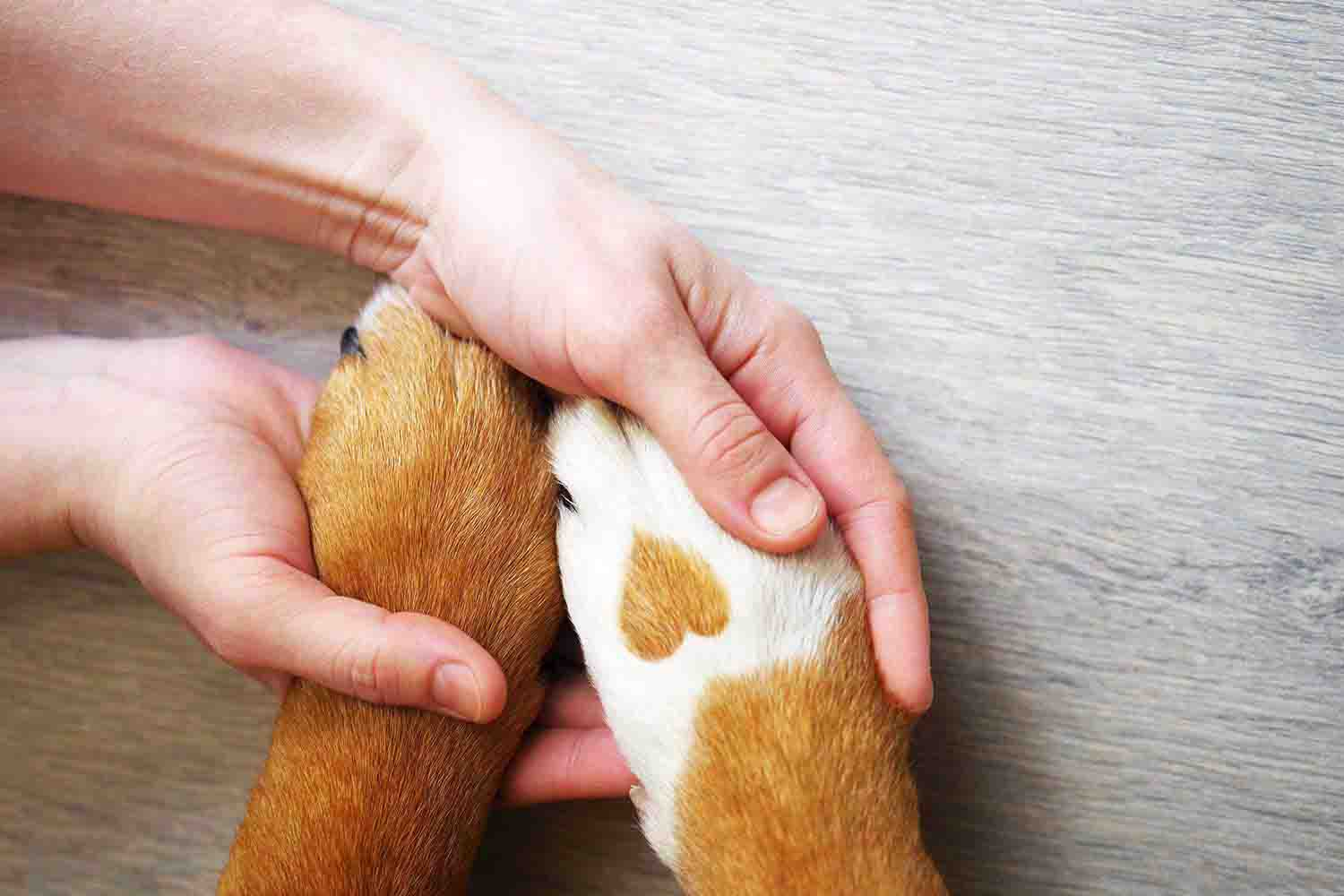 Vet Services for Dogs