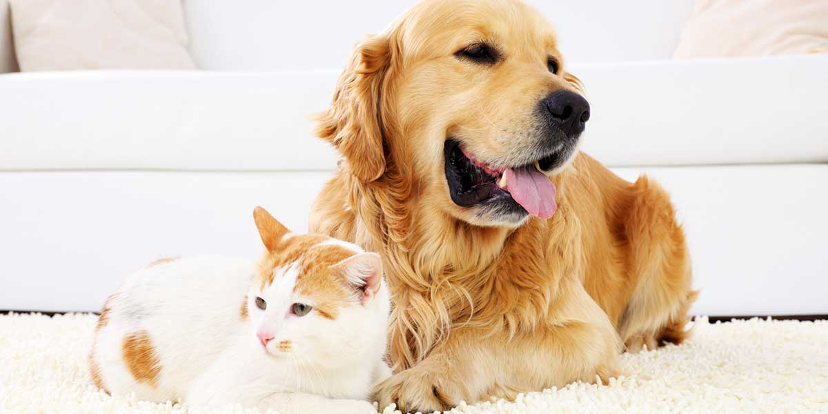 Veterinary Acupuncture Services