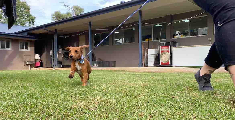 Puppy Pre-School Services